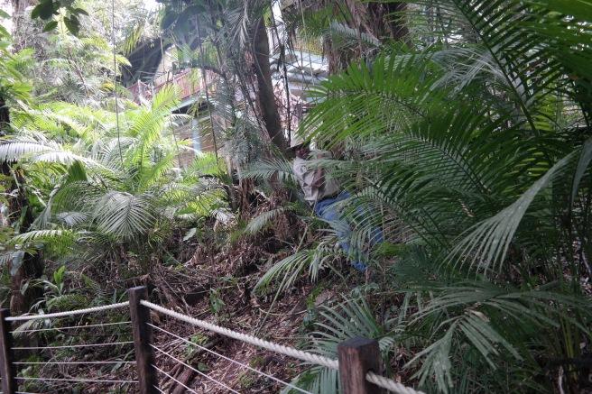 skyrail cableway seilbahn regenwald cairns ausflug tagesausflug erfahrungsbericht diamond view mit baby #missbbdownunder ausblick